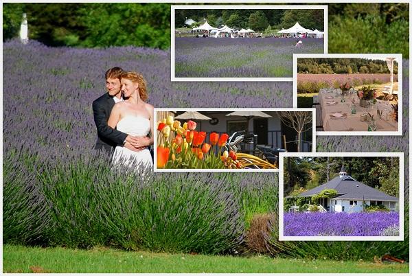Pal indaba Lavender farm, Friday Harbor_Washington - A2zWeddingCards